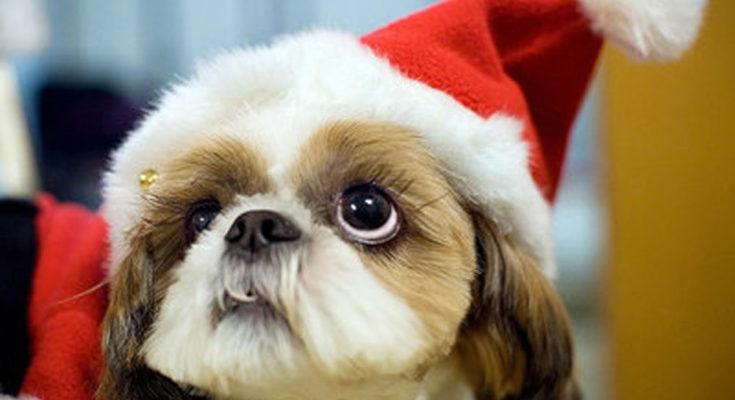 Responsible Pet Possession Weblog