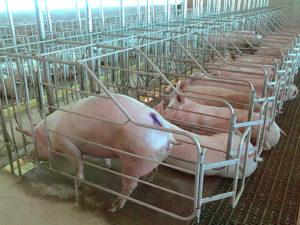 Modern Pig Maintenance System