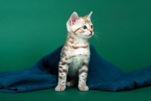 Cat Pet Shop Online - The Top Must-Have Products For Every Cat Owner