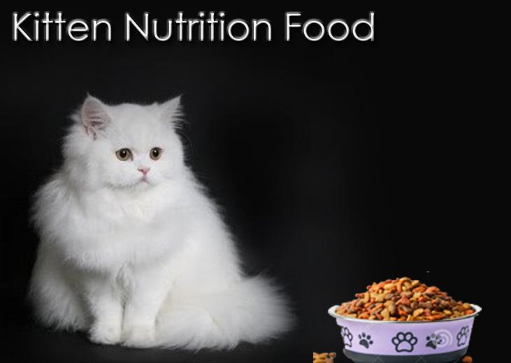 Kitten Nutrіtіоn Fооd