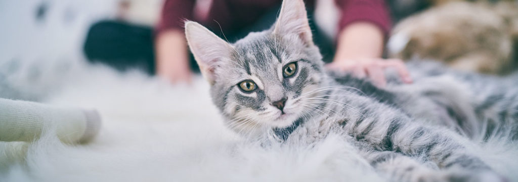 Home Care For Cats and Dogs - Keeping the Cost Down as well as the Health Up