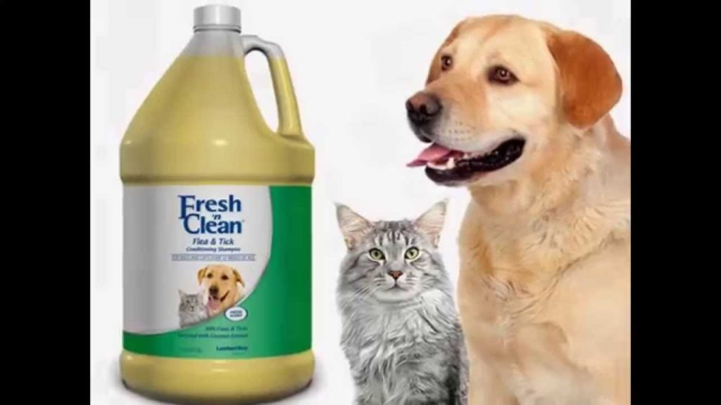 How to Buy Dog Products?