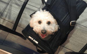 Methods to Buying an Excellent Airline Dog Cage