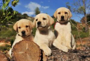 Dogs Life Span - Finest Ideas Revealed