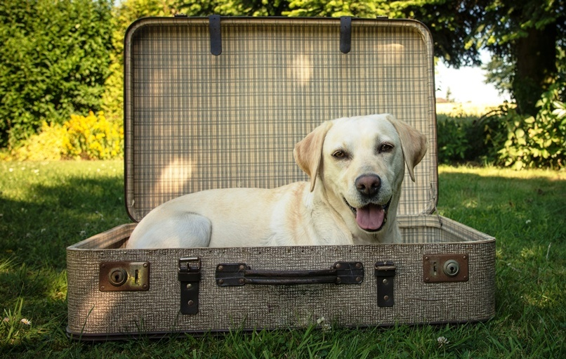 Taking Pets From the UK to France  A Guide to Customs Requirements