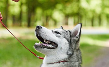 Using Pet Accessories to Train Your Dog