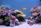 Our Coral Online Shop will Make Your Tank Shine
