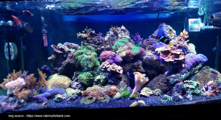 What You Need To Know About Having Coral In An Aquarium