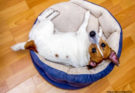 Does Your Pooch Have a Designer Bed?
