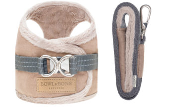 What To Look For When Shopping For Designer Dog Products