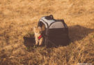 Common Styles of Pet Carriers