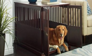 How to Choose the Correct Size for Your Dog Carriers