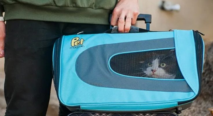 Soft-Sided Pet Carrier - Luxurious Pet Travel