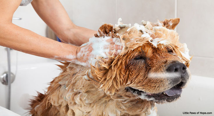 All About Dogs: Dog Grooming